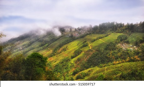 Tea plantation landscape on mountain in Darjeeling