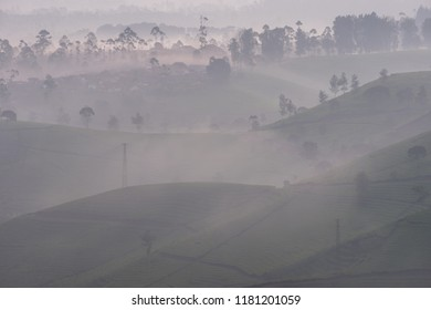 Tea plantation in the misty morning, Bandung, Indonesia