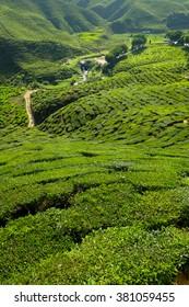 Tea plantation on the mountain - Cameron Highlands, Malaysia