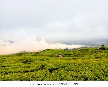 Tea Plantation at Pagar Alam, South Sumatera, Indonesia. Beauty of South Sumatera