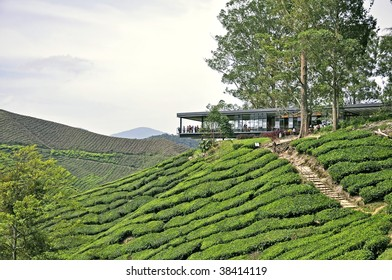 Tea plantation and rest house in Cameron Highlands, malaysia