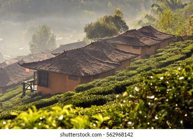 tea plantation and village at Ban Rak Thai , a popular tourist attraction . Mae Hong Son province, North of Thailand .