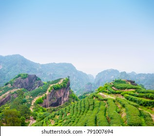 Tea plantation in Wuyi Mountains, located in northern Fujian Province, China.