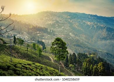 Tea plantations in Darjeeling, West Bengal, India. Stunning views of hills on sunrise.