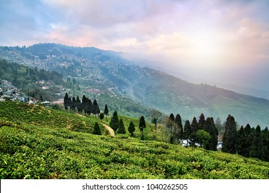 Tea plantations in Darjeeling, West Bengal, India. Stunning views of hills on sunrise.