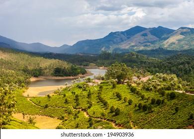 Tea plantations in India. Province Kerala