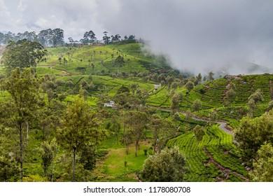 Tea plantations in mountains around Lipton's Seat near Haputale, Sri Lanka