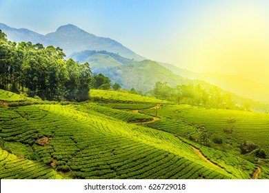 Tea plantations in Munnar, Kerala, India. Stunning views of green hills with blue sky.