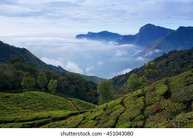 Tea plantations in Munnar, Kerala, South India. It is situated at around 1,600 meters above sea level in the Western Ghats range of mountains.