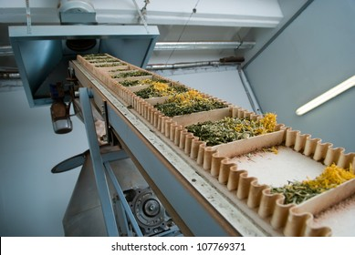 Tea raw material in the production line