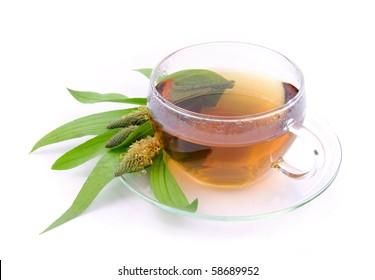 tea ribwort plantain