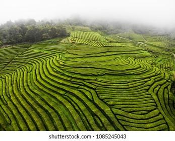 Tea terrace plantation drone shot in Azores