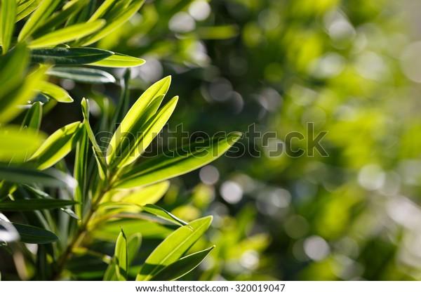 tea tree blur background