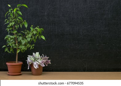 Teacher or student desk table. Education background. Education mockup concept. Green plants trees in the pot on blackboard (chalkboard) background.