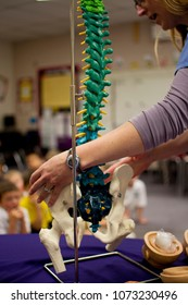 Teaching brain injury prevention and head safety to children with nervous system display and eggs