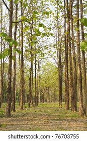 Teak forests to the environment.