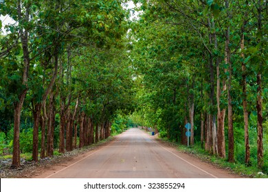 Teak forests on the rural road with environment green leaves, Thailand
