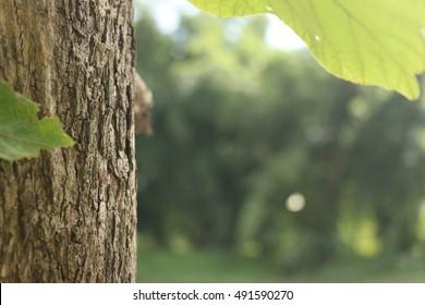 Teak tree trunk on green forrest background