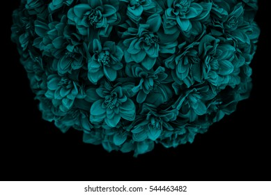 Teal Blue Bouquet of Flowers Against a Black Background