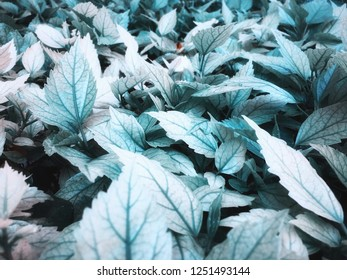 Teal blue Leafs for background