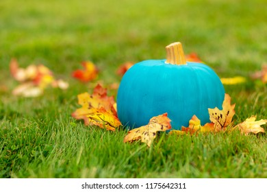 teal pumpkin outside. symbol of alternative non-food treats for kids with food allergy. the concept of health for children in the Halloween season. Copy space for your text