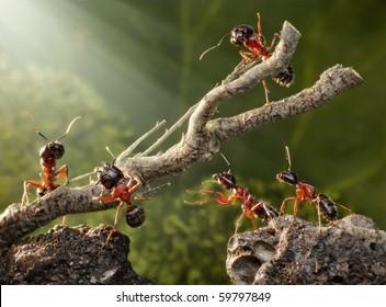team of ants breaking down dead tree