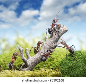 team of ants breaking down weathered tree, teamwork concept