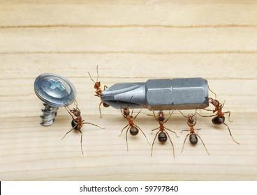 team of ants carries screwdriver to screw on wood, teamwork