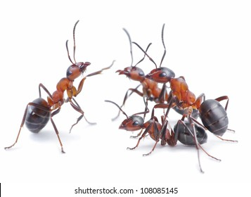 team of ants, conference