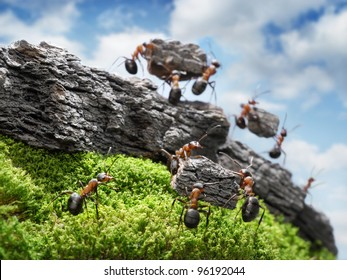 team of ants constructing Great Wall, teamwork concept, focused on nearest block