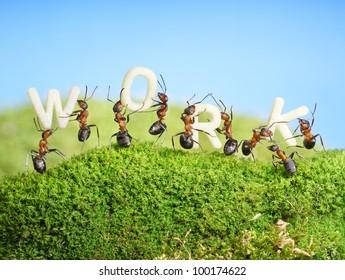 team of ants constructing word WORK, teamwork