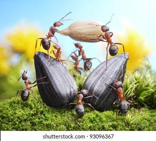 team of ants harvesting sunflower crops, agriculture teamwork