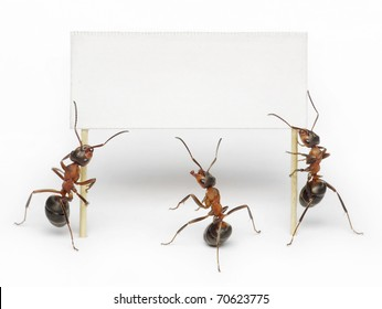 team of ants holding blank, placard, message or advertising billboard