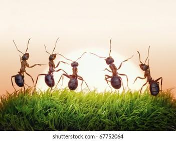 team of ants on sunrise, joy of life, concept of success