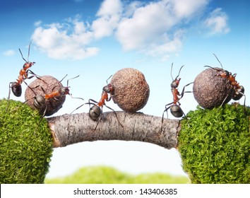 team of ants rolling stones on bridge, teamwork