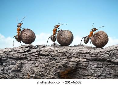 team of ants rolling stones on rock, teamwork