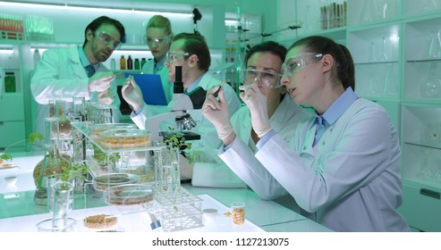 Team of Biochemists Specialists People Working with Genetically Seeds and Talking in Organic Agriculture Laboratory Room