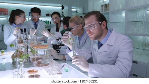 Team of Biologists Talking and Discovering New Cure Treatment for Hybrid Plant Diseases in Agriculture Science Laboratory