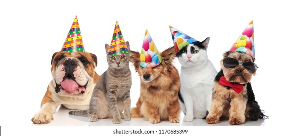 team of five cats and dogs of different brees ready for birthday party while sitting and lying on white background