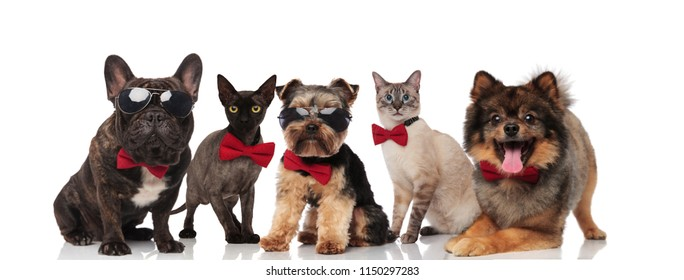 team of five cool pets wearing sunglasses and bowties standing, sitting and lying on white background