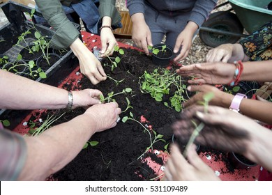 team gardenening, hands in earth with plant