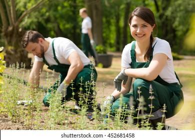 Team of gardeners planting flowers in the garden