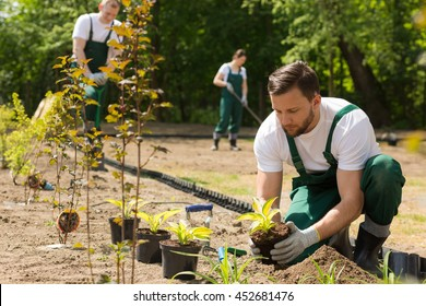Team of the gardeners at work,planting,weeding and digging in the garden
