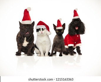 team of happy santa cats and dogs panting and sitting on white background
