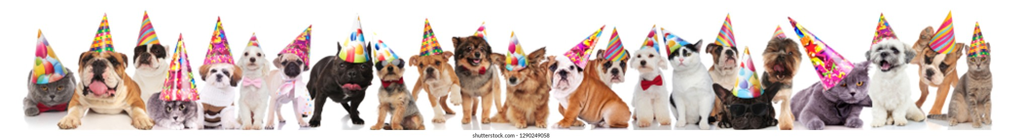 team of many cats and dogs wearing birthday hats while standing, sitting and lying on white background