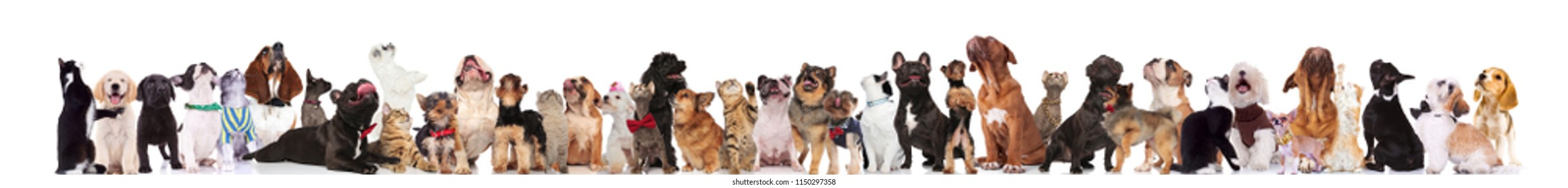 team of many curious cats and dogs wearing bowties and collars looking up while standing, sitting and lying on white background