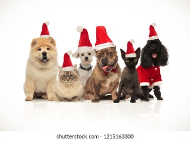 team of six cute pets wearing santa hats panting while sitting and standing on white background