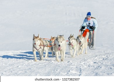 A team of six Husky dogs pulling a sled along a snowy road in winter