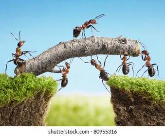 team work, ants constructing bridge