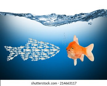teamwork concept with fishes